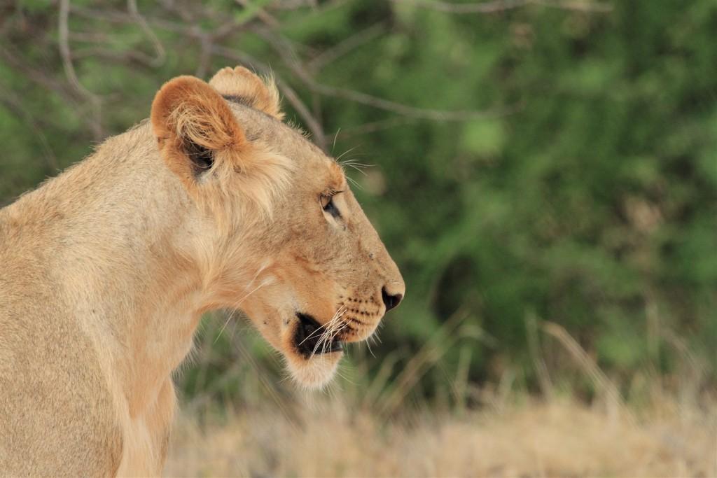 Samburu Animals – Samburu National Reserve